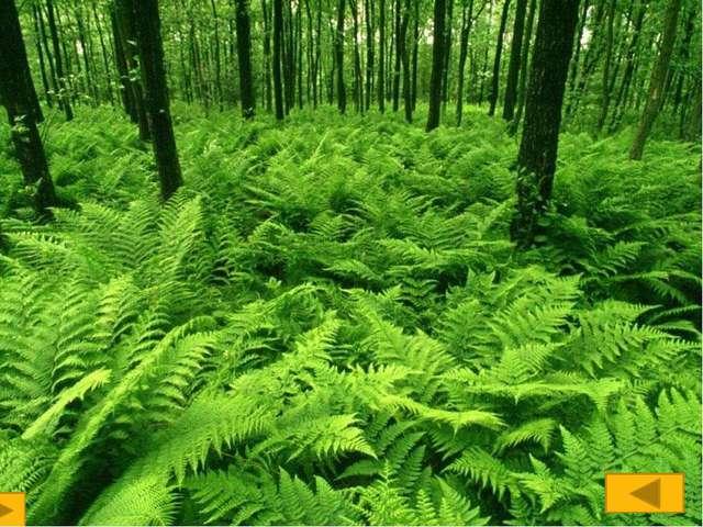 2.Лишайники хорошо распространены в природе, но почти не встречаются в города...