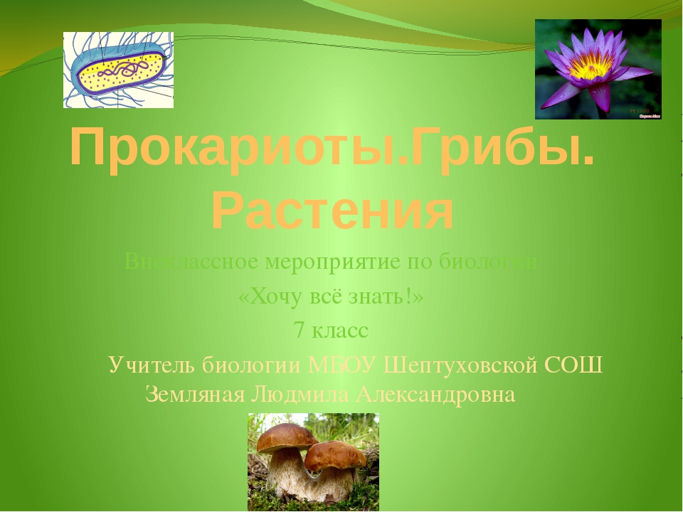 1 этап «Аналитики»-5б. 1.В лесу произрастало много папоротников, однако после...