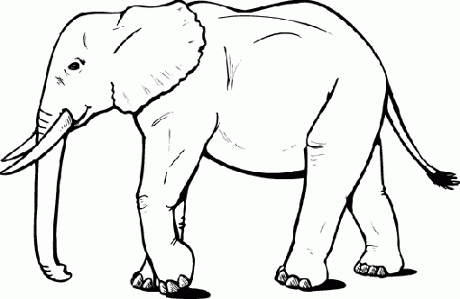 elephant_drawing-143