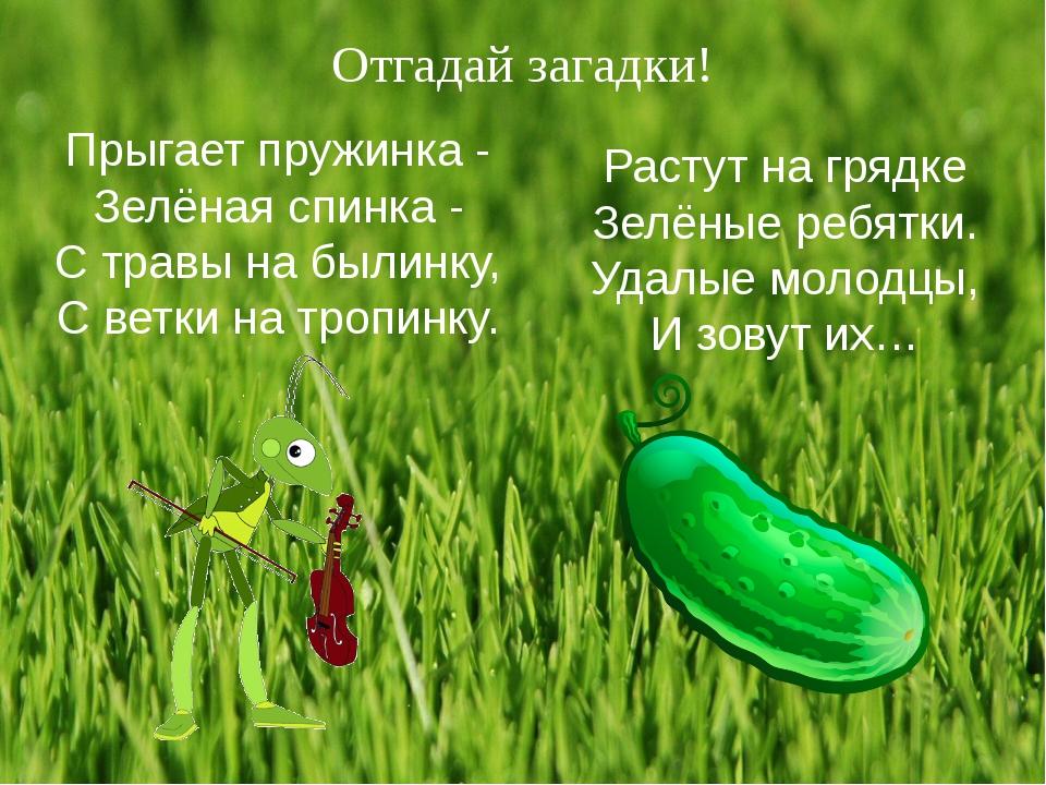 Отгадай загадки! Прыгает пружинка - Зелёная спинка - С травы на былинку, С ве...
