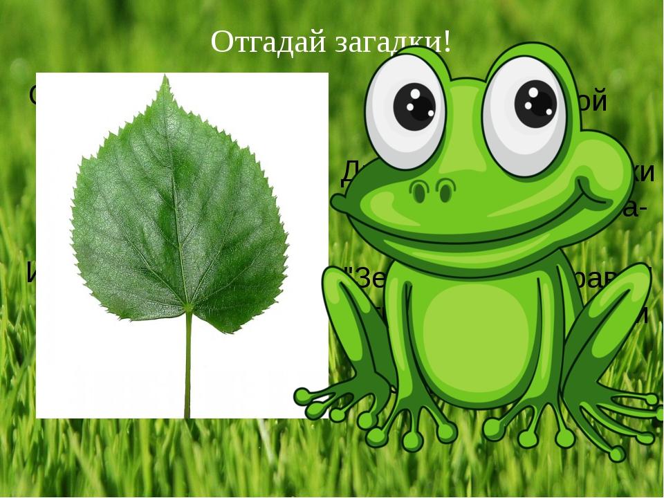 Отгадай загадки! Он зелёный у цветов, Встретить солнышко готов, Свеж, изящен,...