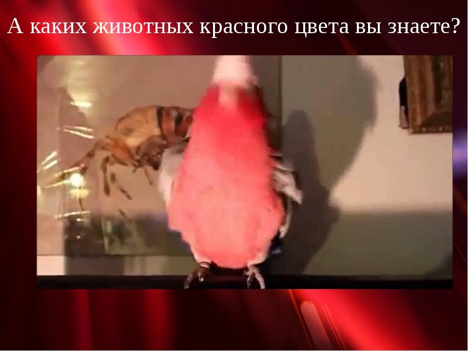 А каких животных красного цвета вы знаете?