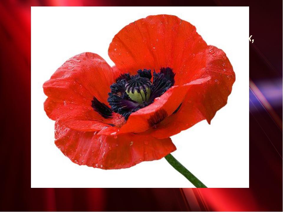 «Поле чудес» Это очень красивый полевой цветок, семена которого используют ко...