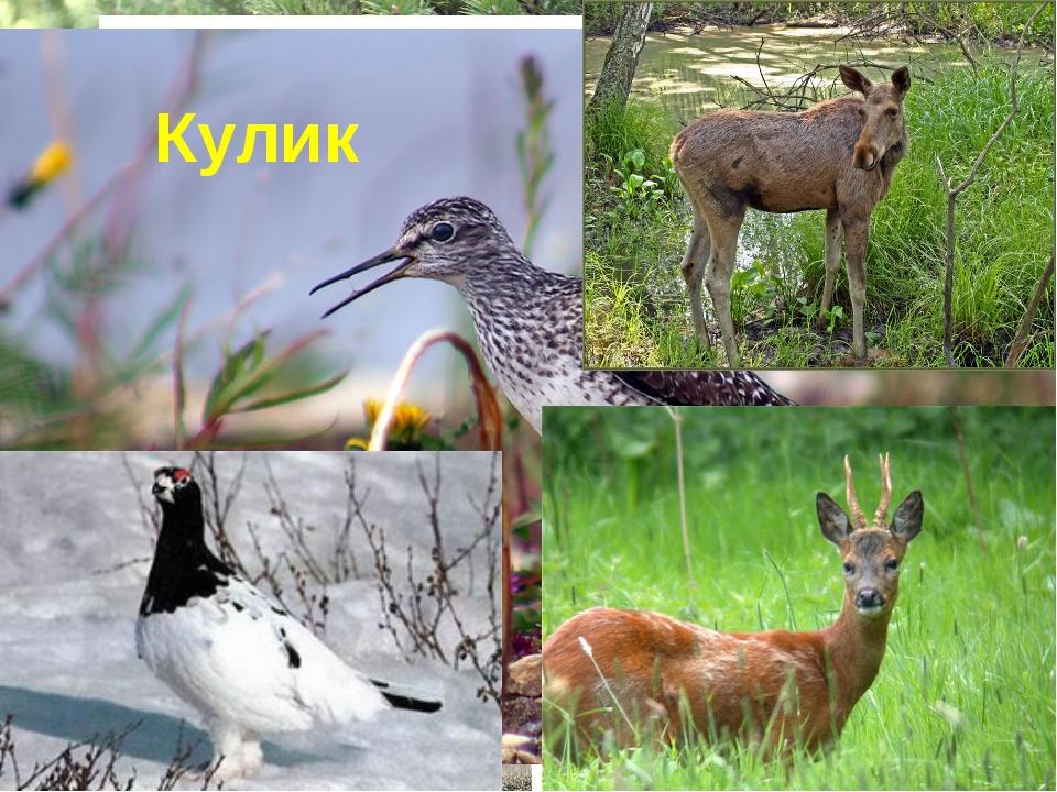 Журавль Цапля Комар Водяная крыса Бобер Кулик