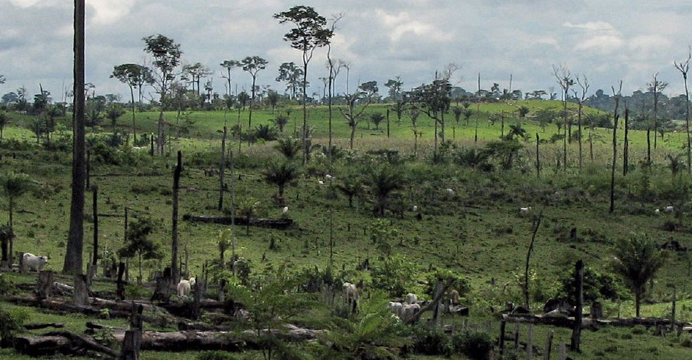 C:\Users\1\Desktop\deforestation_near_capixaba_acre_brazil_1000.jpg