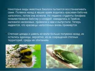 Некоторые виды животных биологи пытаются восстанавливать сами. Полвека назад