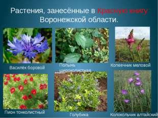 Растения, занесённые в Красную книгу Воронежской области. Пион тонколистный К