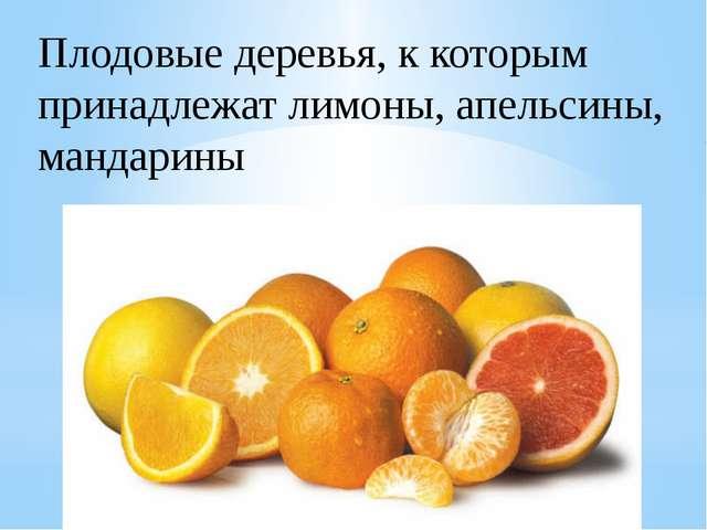 Плодовые деревья, к которым принадлежат лимоны, апельсины, мандарины