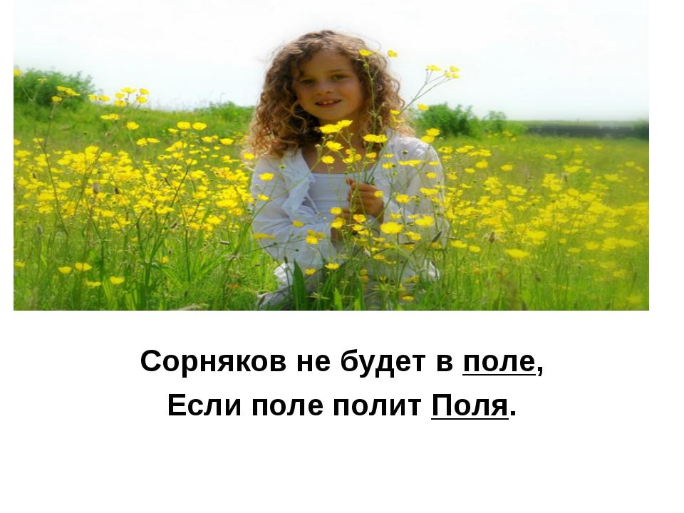 Сорняков не будет в поле, Если поле полит Поля.
