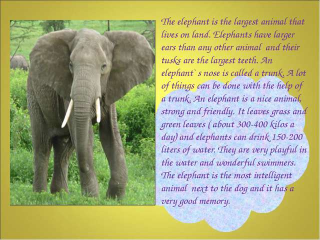 The elephant is the largest animal that lives on land. Elephants have larger...