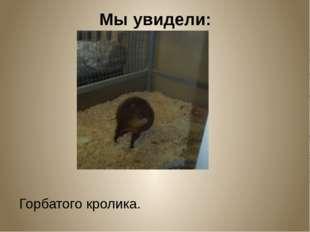Мы увидели: Горбатого кролика.