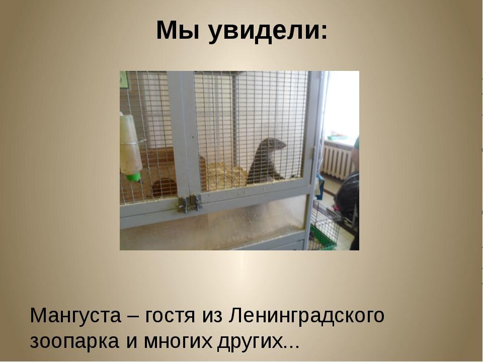 Мы увидели: Мангуста – гостя из Ленинградского зоопарка и многих других...