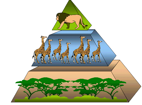 Урок онлайн. . Экологические пирамиды - Современные уроки биологии