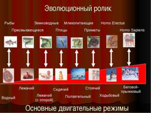 Эволюционный ролик Рыбы Пресмыкающиеся Земноводные Птицы Млекопитающие Примат