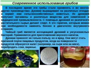 В последнее время эти грибы стали применять и во многих других производствах