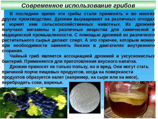 В последнее время эти грибы стали применять и во многих других производствах...