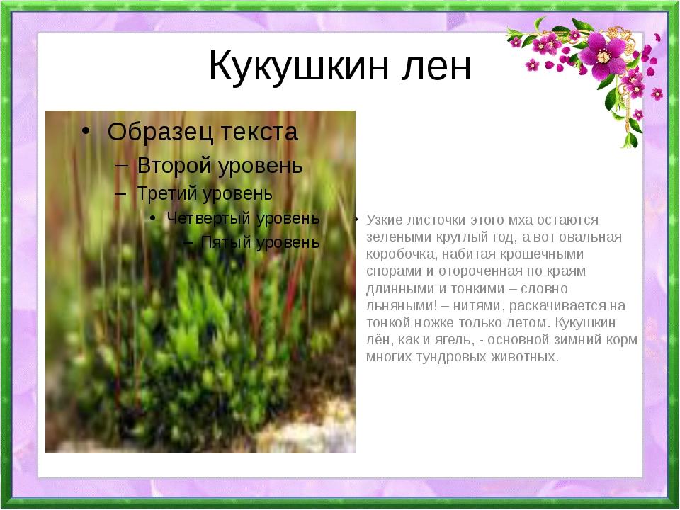 Цветок кукушкин лён