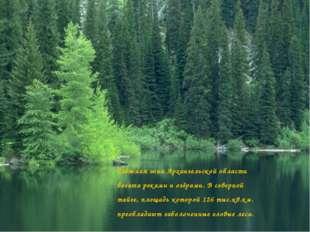 Таёжная зона Архангельской области богата реками и озёрами. В северной тайге
