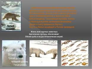 белый медведь Наиболее распространённым зверем Арктики является самый крупны