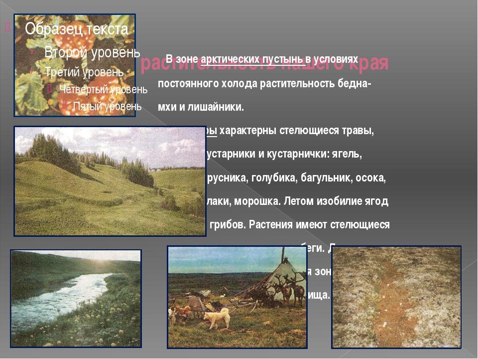 растительность нашего края В зоне арктических пустынь в условиях постоянного...