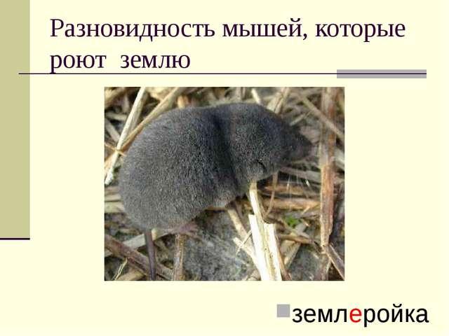 Разновидность мышей, которые роют землю землеройка