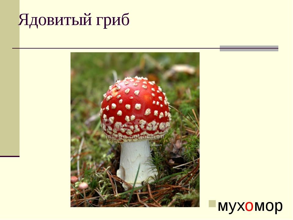 Ядовитый гриб мухомор