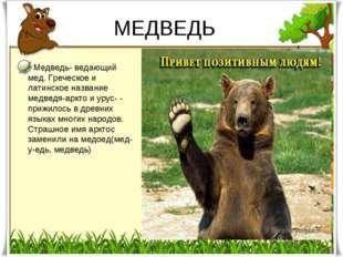 МЕДВЕДЬ Медведь- ведающий мед. Греческое и латинское название медведя-аркто и
