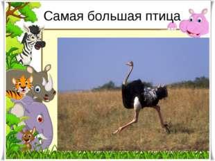 Самая большая птица