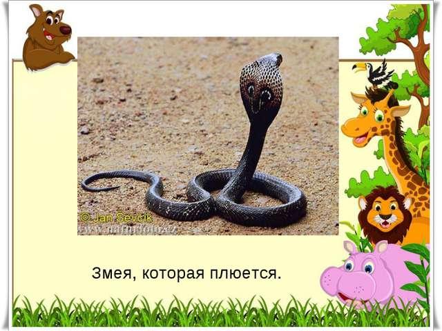 Змея, которая плюется.