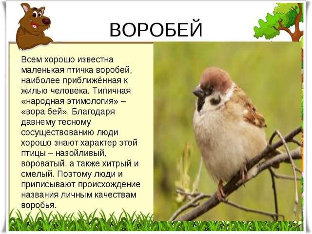 ВОРОБЕЙ Всем хорошо известна маленькая птичка воробей, наиболее приближённая...