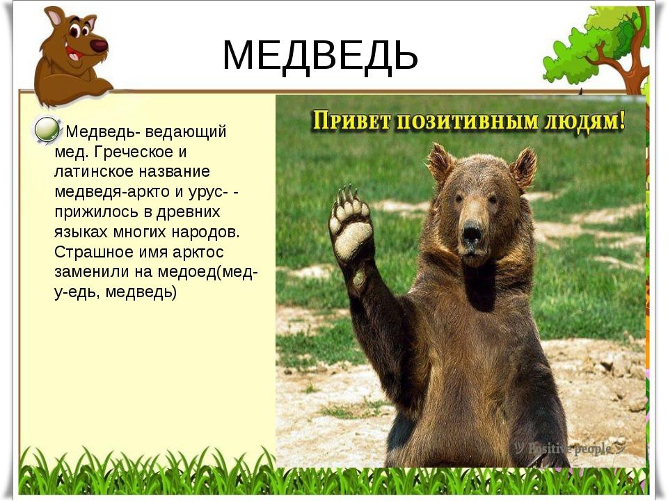 МЕДВЕДЬ Медведь- ведающий мед. Греческое и латинское название медведя-аркто и...