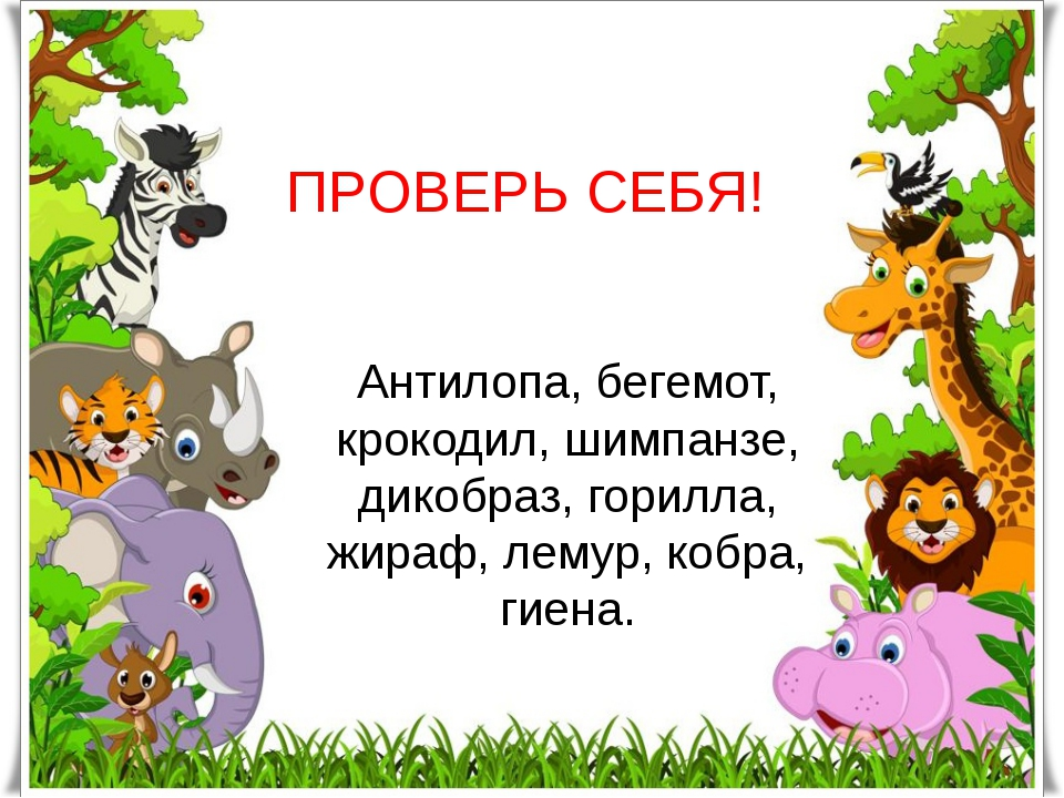 ПРОВЕРЬ СЕБЯ! Антилопа, бегемот, крокодил, шимпанзе, дикобраз, горилла, жираф...