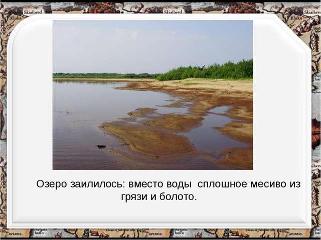 Озеро заилилось: вместо воды сплошное месиво из грязи и болото.
