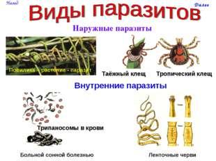 Наружные паразиты Повилика – растение - паразит Таёжный клещ Тропический клещ