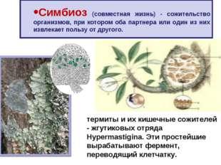 Симбиоз (совместная жизнь) - сожительство организмов, при котором оба партнер