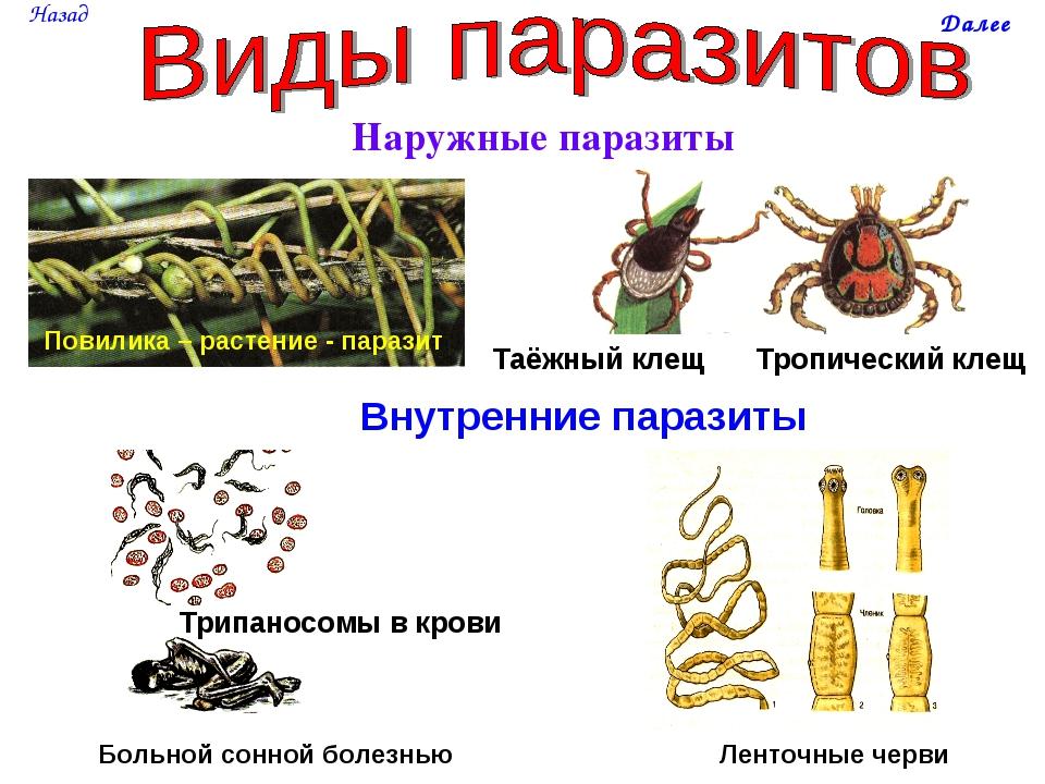 как паразиты покидают организм