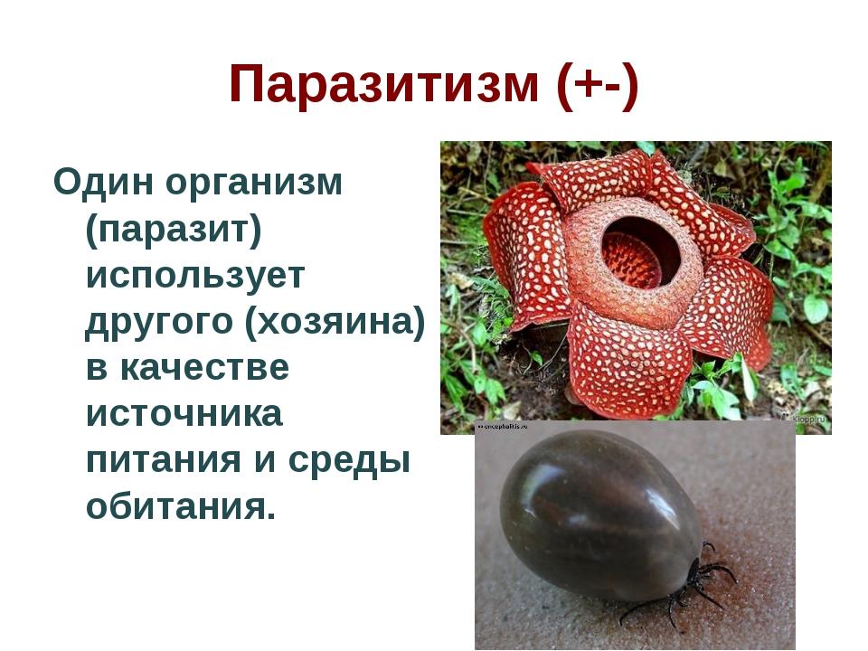 Паразитизм (+-) Один организм (паразит) использует другого (хозяина) в качест...