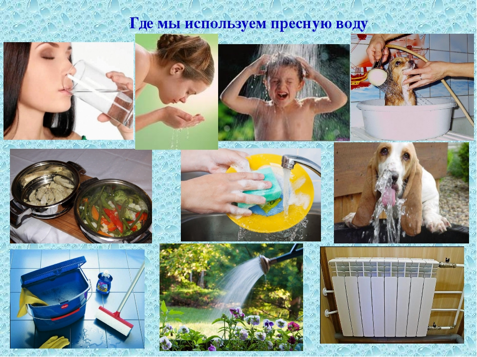 Где мы используем пресную воду Где мы используем пресную воду