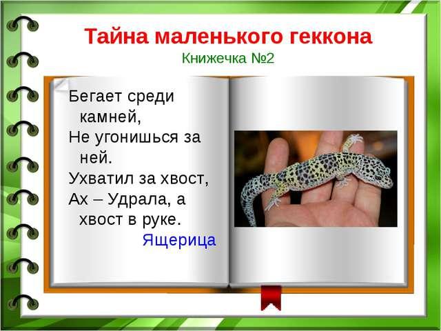 Тайна маленького геккона Книжечка №2 Бегает среди камней, Не угонишься за ней...