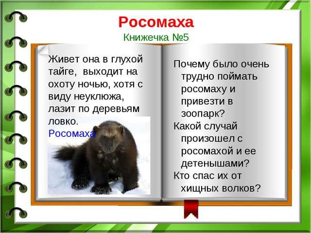 Росомаха Книжечка №5 Почему было очень трудно поймать росомаху и привезти в з...