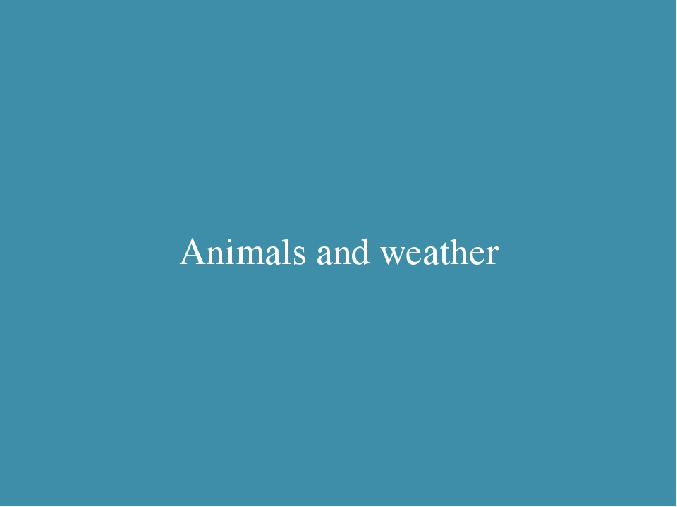 Two rabbits Animals and weather