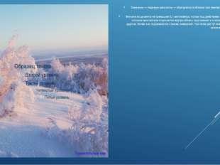 Снежинки — ледяные кристаллы — образуются в облаках при температуре -20-40 гр