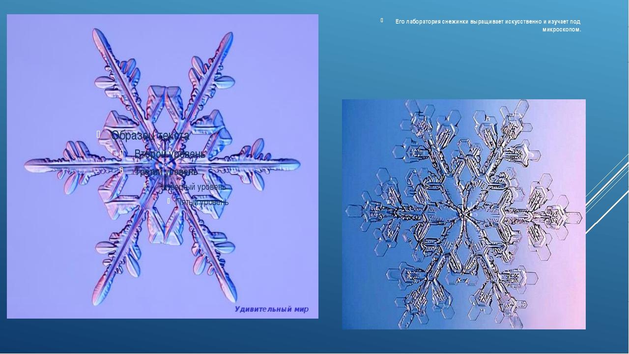 Его лаборатория снежинки выращивает искусственно и изучает под микроскопом.
