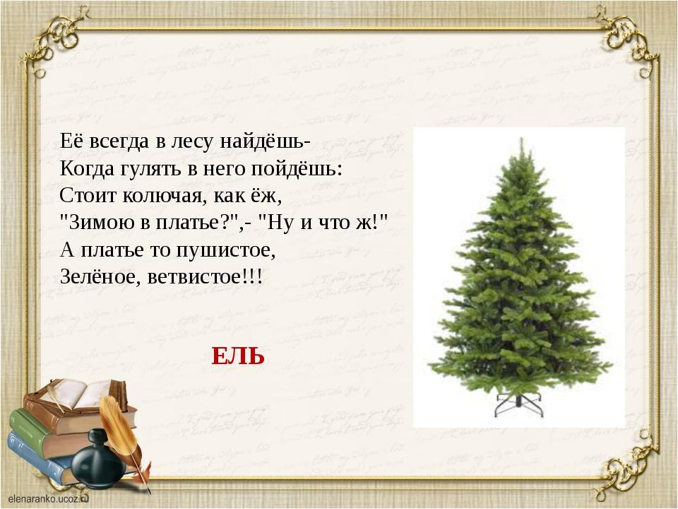 Её всегда в лесу найдёшь- Когда гулять в него пойдёшь: Стоит колючая, как ёж...