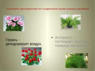 Очистить пространство от сигаретного дыма помогут растения Герань - дезодори
