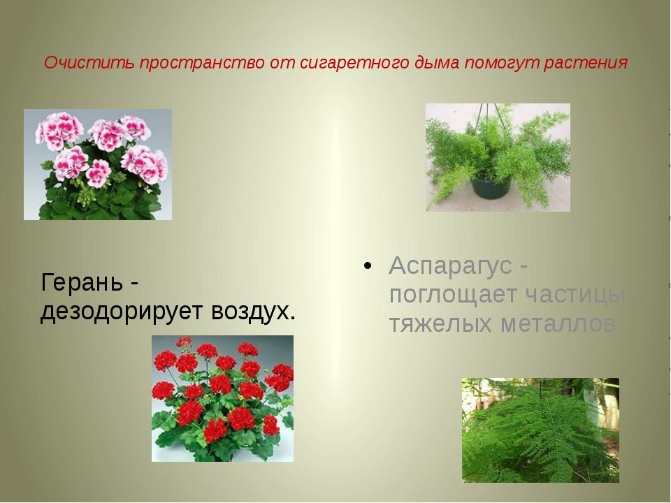 Очистить пространство от сигаретного дыма помогут растения Герань - дезодори...