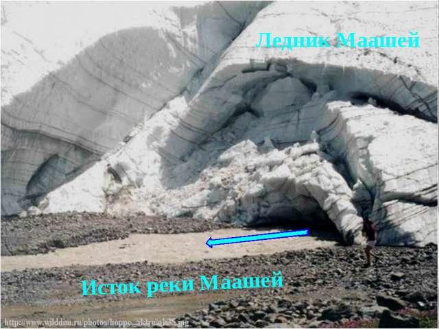 Истоком может быть ледник. исток реки Аккем Ледник Маашей Исток реки Маашей