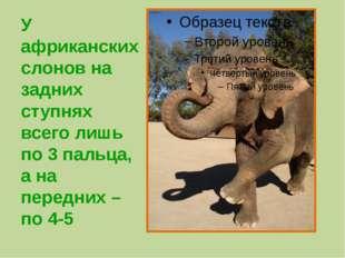 У африканских слонов на задних ступнях всего лишь по 3 пальца, а на передних