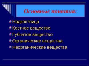 Основные понятия: Надкостница Костное вещество Губчатое вещество Органические