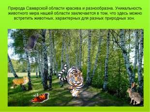 Природа Самарской области красива и разнообразна. Уникальность животного мира